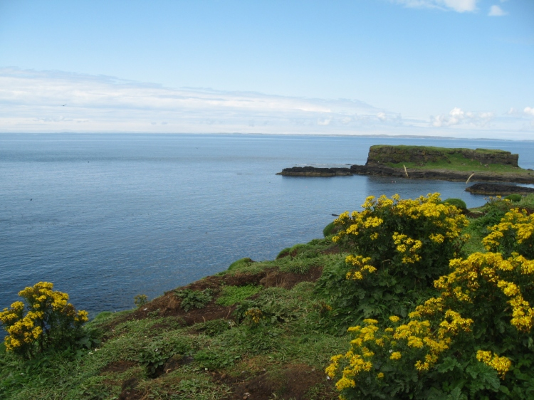 Wild Flowers on Lunga